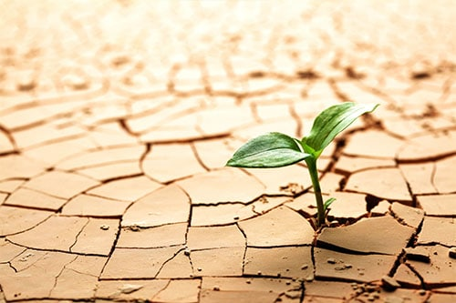 plant in dry cracked mud to represent dry mouth